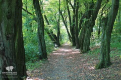 bronowice_park