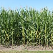 fields 2674177 1920