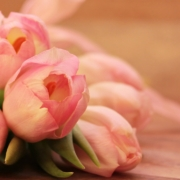 tulips 2068692 1920