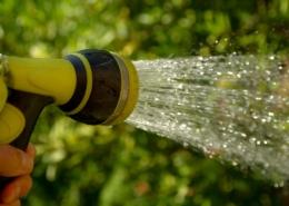 watering 1601143 1920